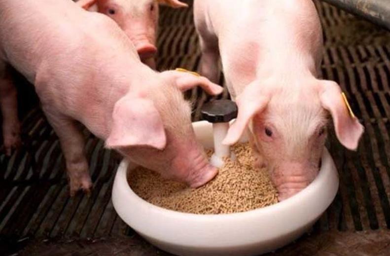Уход за телятами - кормление телят и лечение заболеваний телят